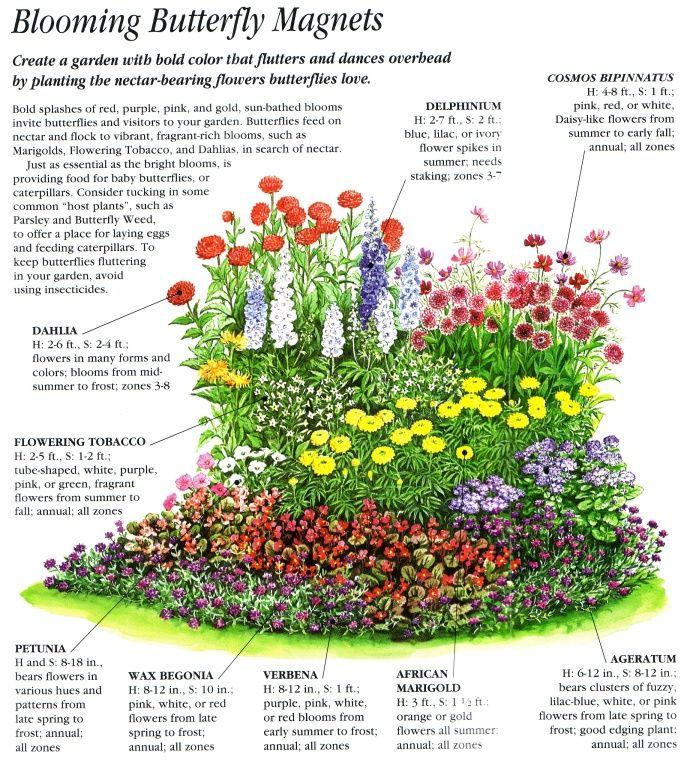 Pin By Michelle Boom On The Wildlife Gardener Flower Garden Plans Butterfly Garden Design Butterfly Garden