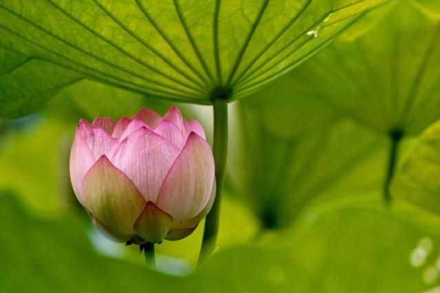 And the day came when the risk to remain tight in a bud was more painful than the risk it took to blossom.  –Anais Nin