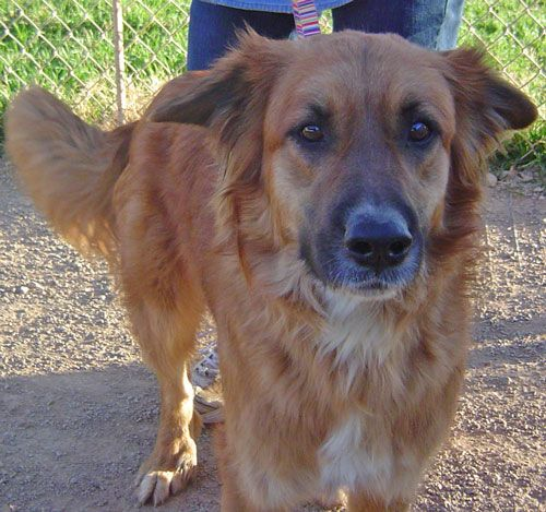 Adopt Rocky On Help Dogs Animals Adoption