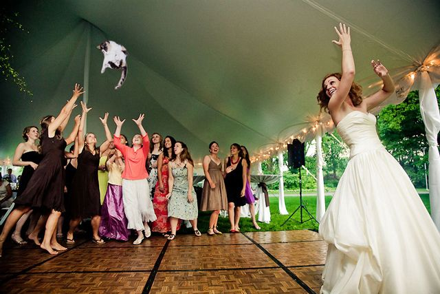 Brides Throwing Cats Instead Of Flower Bouquets Bride Wedding