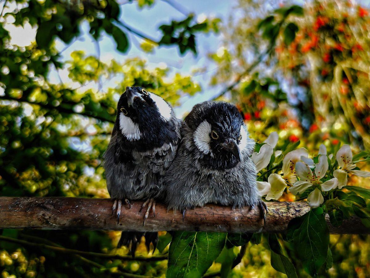 Pin By Newday On Iraq In 2020 Animals Owl Bird