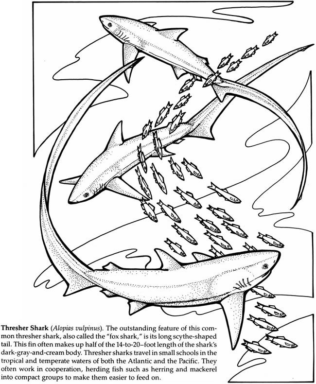 Sharks Of The World Coloring Book Dover Publications Shark