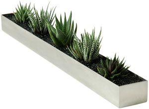 Plants In Narrow Trough Along Windowsill Use Paint Plaster Trough Trough Planters Planter Pots Indoor Rectangular Planter Box