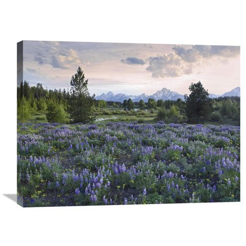 Lupine Meadow, Grand Teton National Park, Wyoming By Tim Fitzharris, 24 X 32-Inch Wall Art