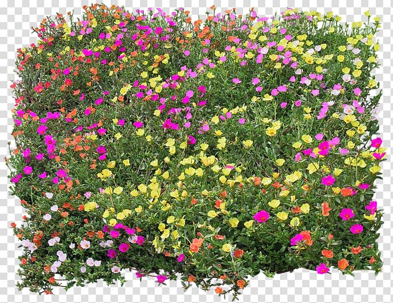 Purple Pink And Yellow Moss Roses Flower Texture Mapping Bed Top View Transparent Background Png Clipart Flower Texture Trees Top View Tree Psd