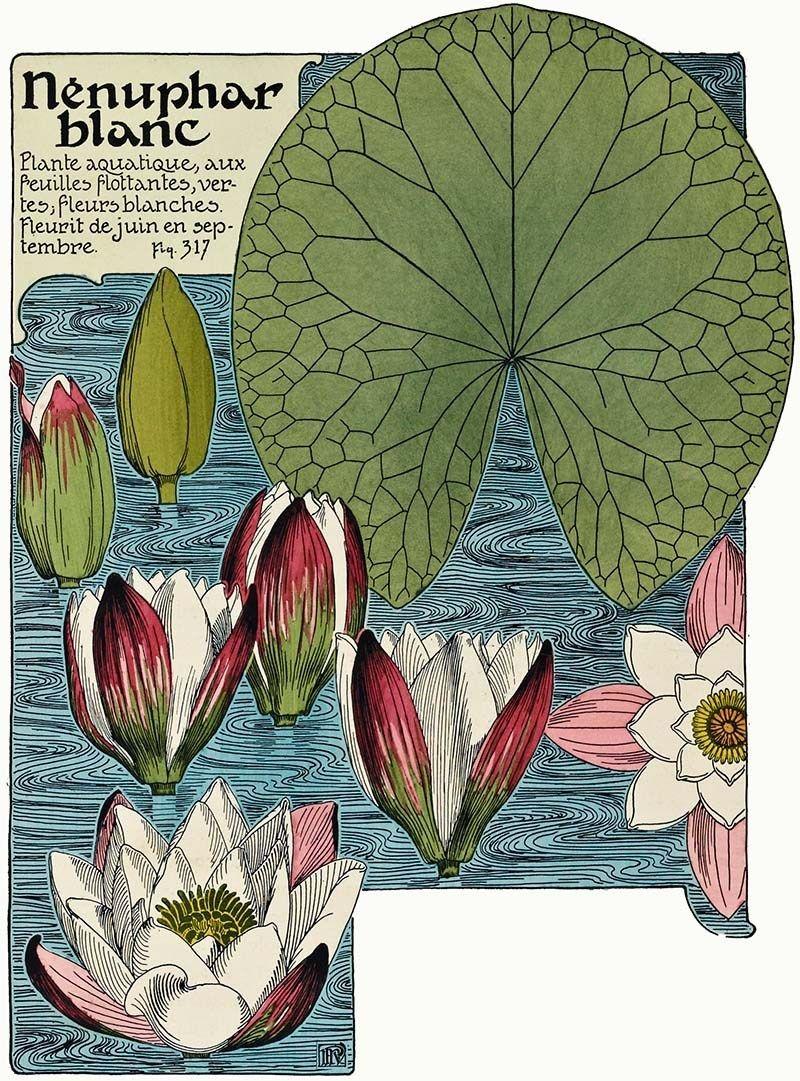 Beautiful Free Art Nouveau Flower Prints To Download - Picture Box Blue