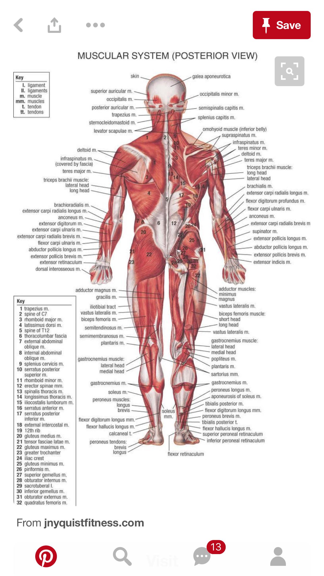 Excepcional Lado Grises Carrete Anatomía Bosquejo - Anatomía de Las ...
