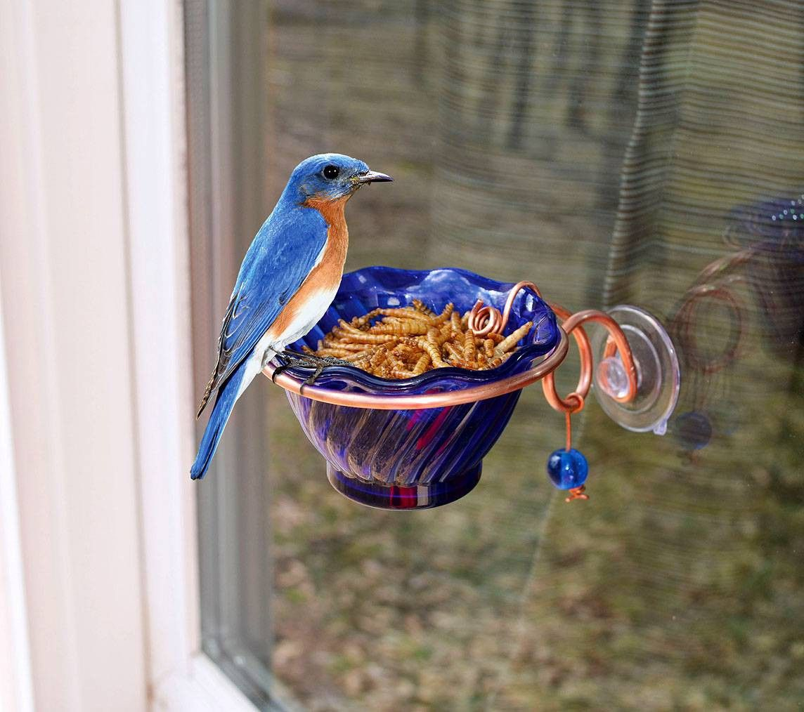 Bluebird mealworm window feeder bird feeders diy bird