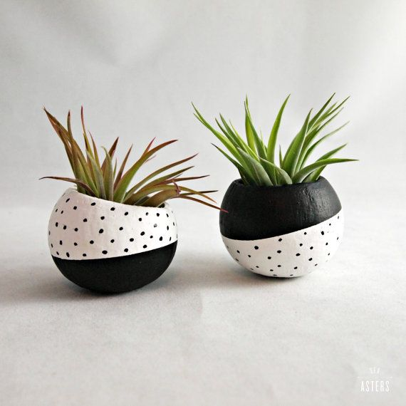 Air Plant Pod Inverse Set Black White Spots With Air Plants Painted Flower Pots Painted Plant Pots Air Plants