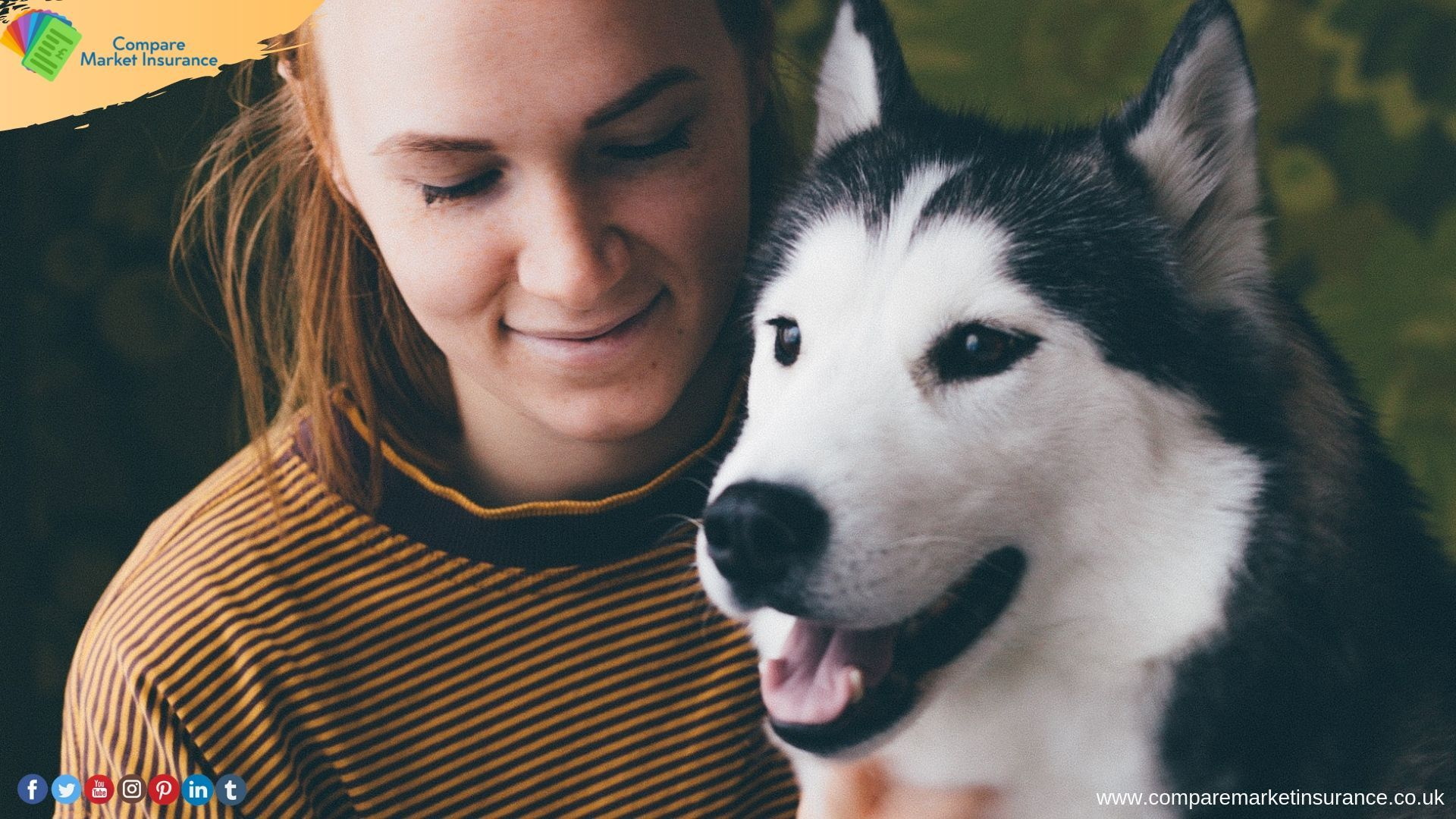 Need To Take More Care Of Your Pet Prefer Pet Insurance With