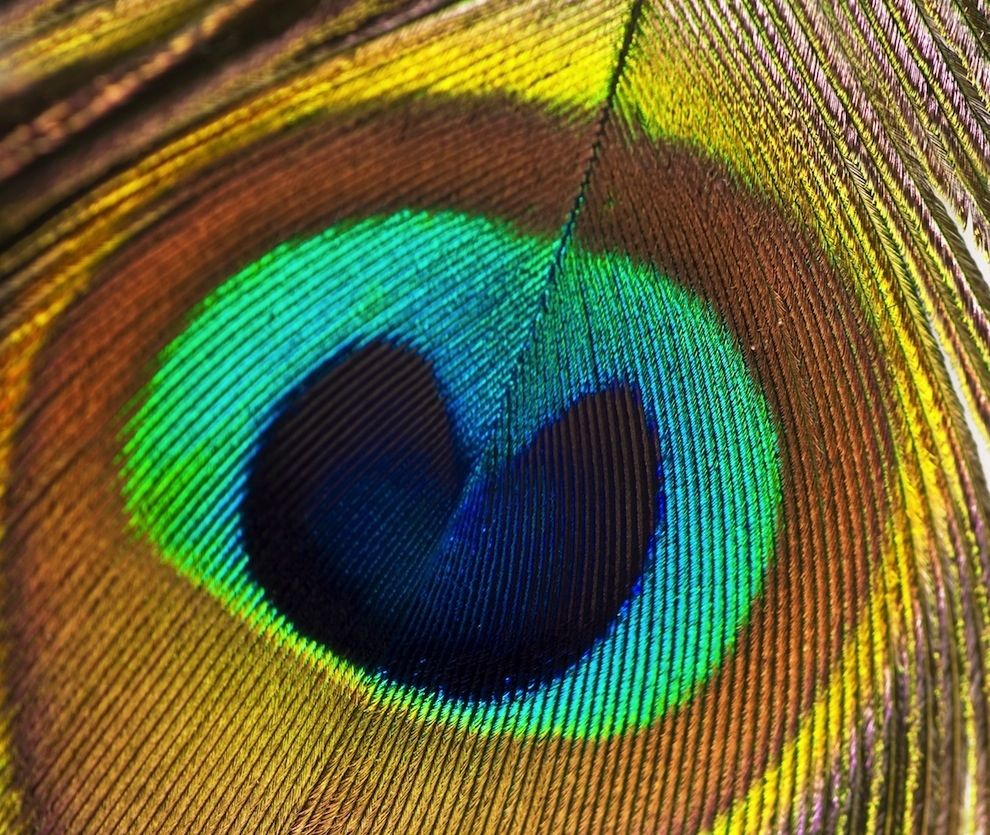 21 Unbelievable Photos Of Symmetry In Nature Geometry In Nature Symmetry Design Fractal Patterns