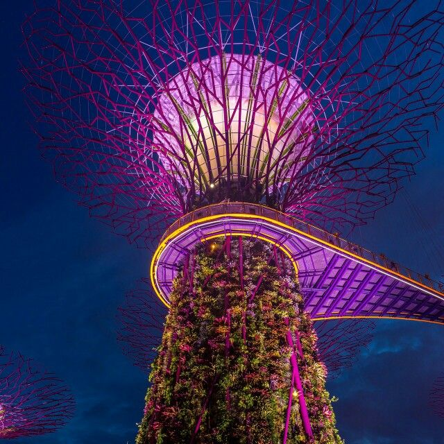 Garden of the Bay ..Singapore