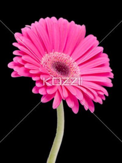 Birth Month Flower April By Brish08 On Deviantart April Birth Flower Birth Month Flowers Birth Flowers