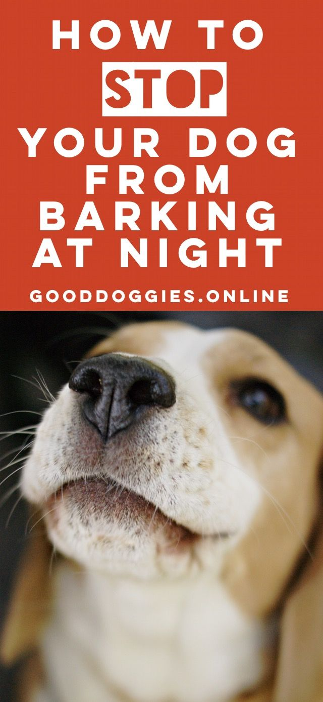 How To Get Your Dog To Stop Barking At Night Time Dog Barking At Night Dog Barking Stop Dog Barking