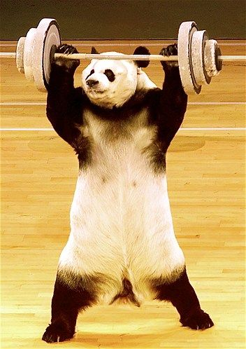 Yingying A Panda Lifts Weights During A Performance Of The Chinese