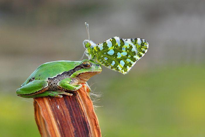 Eläimet eläin.: Toukokuu 2012