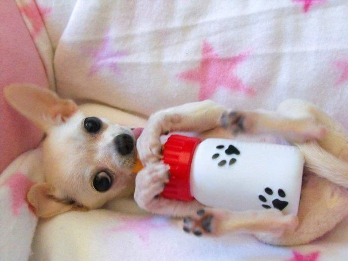 Chi with baby bottle.... So cute!!