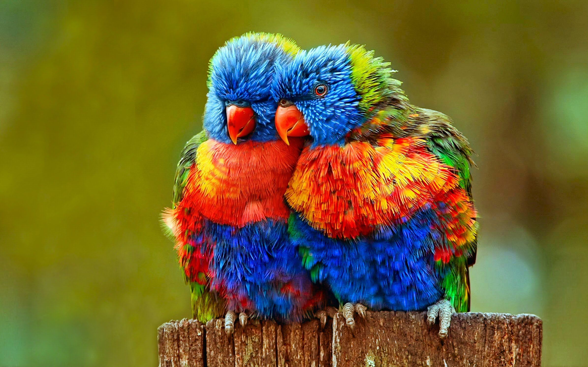 Parrot talking to it's friends - Most Beautiful Colorful ... - photo#46