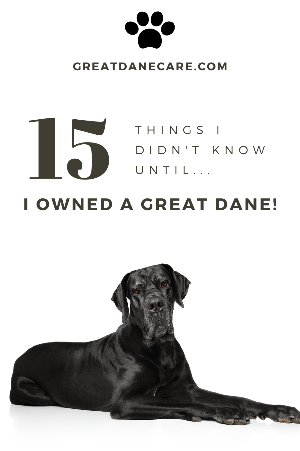 Great Dane Facts 15 Things You Didn T Know In 2020 Great Dane Facts Great Dane Great Dane Dogs
