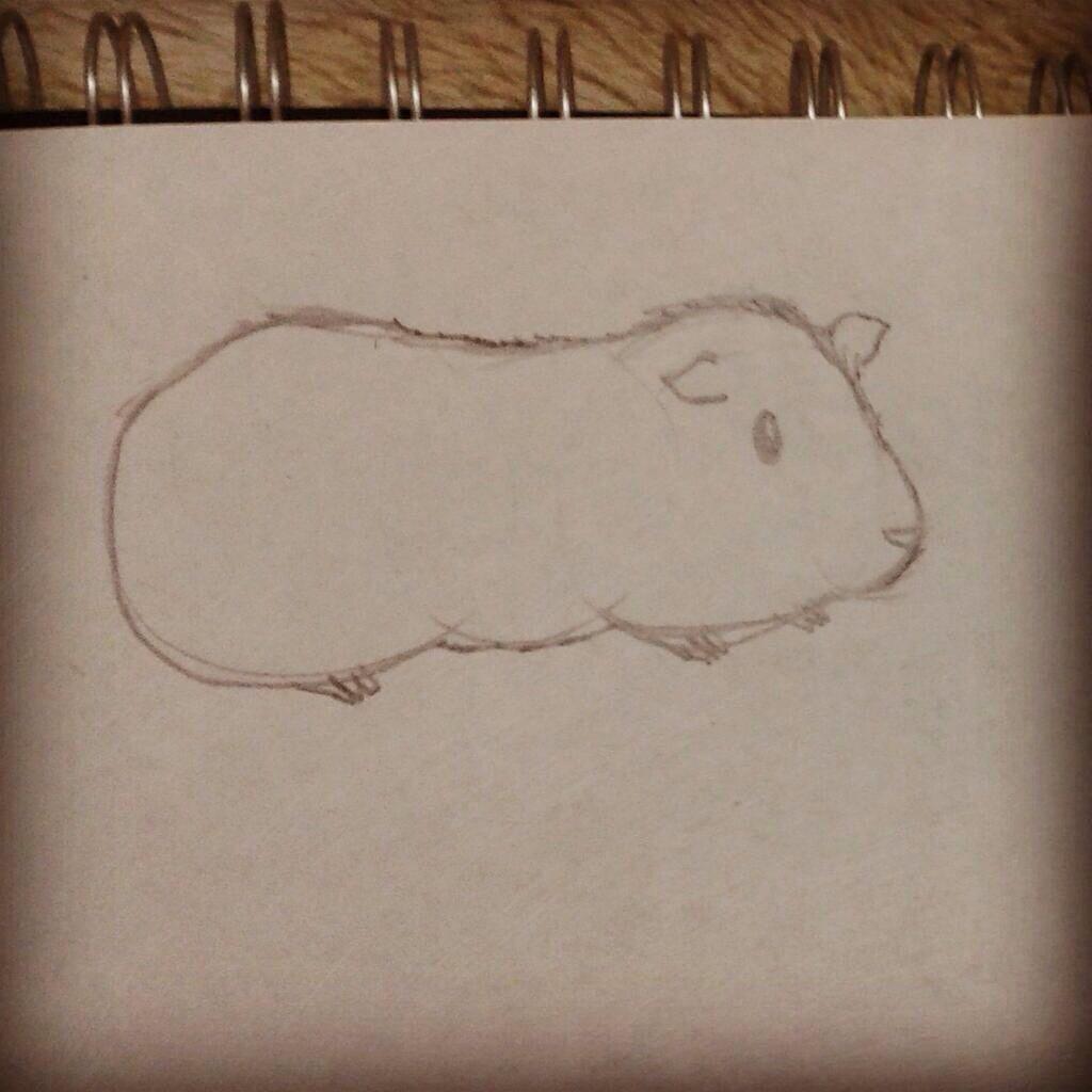 Guinea Pig sketch.