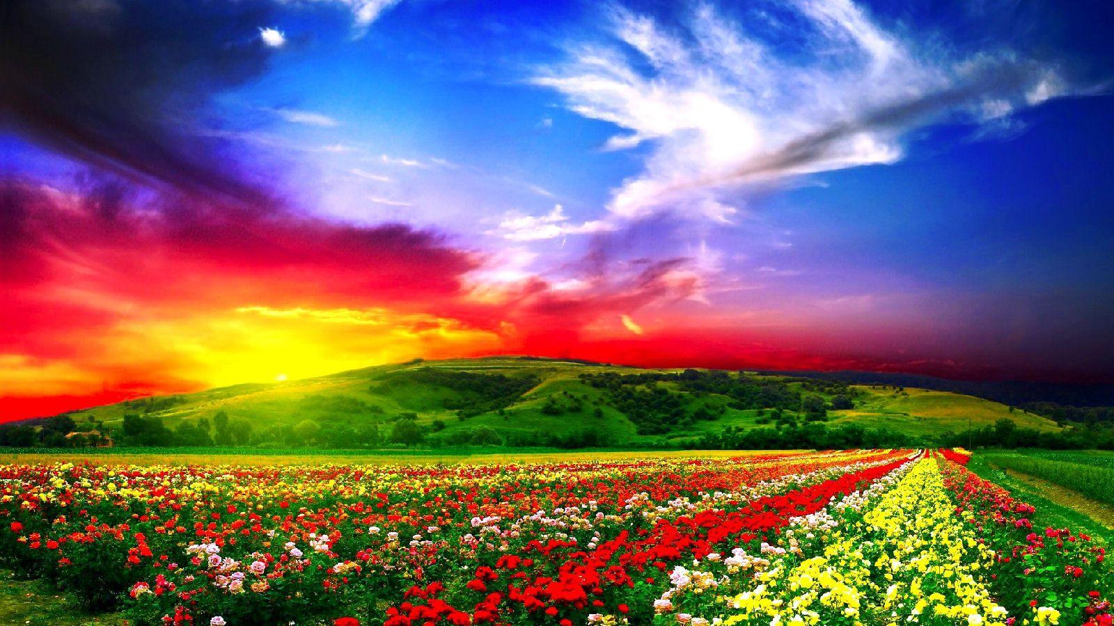Flower Field Wallpapers, 43 Flower Field 2016 Wallpaper'-s Archive ...
