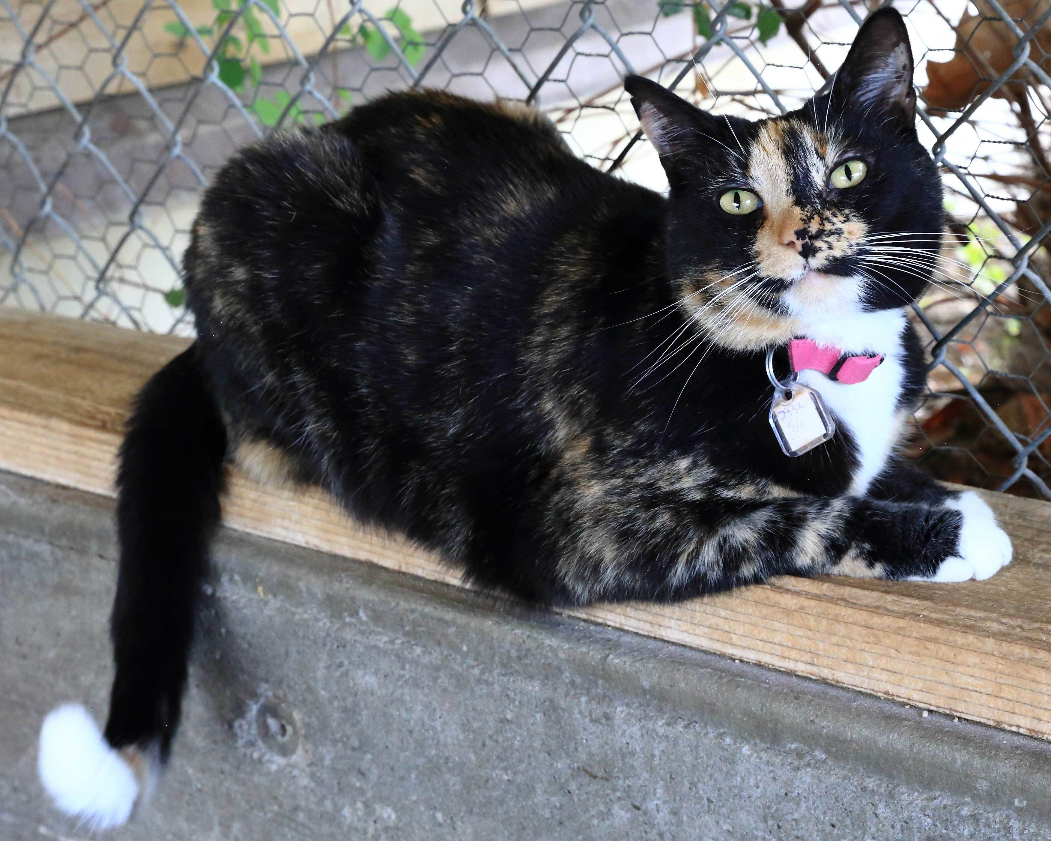 Adopt Squeaks on Petfinder in 2020 Cat adoption, Animal