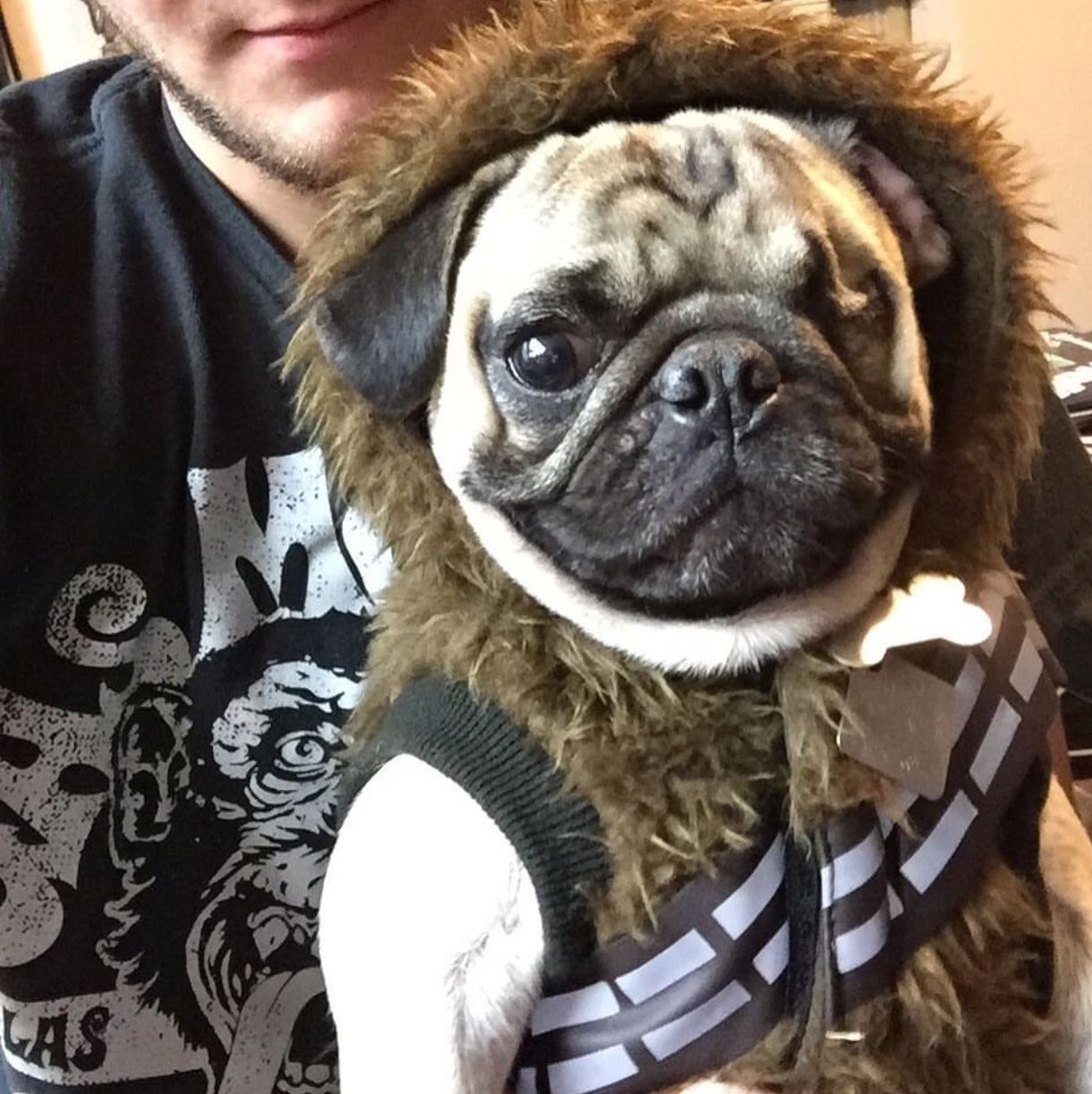 Walter, the OneEyed Wookie French bulldog funny, Merle