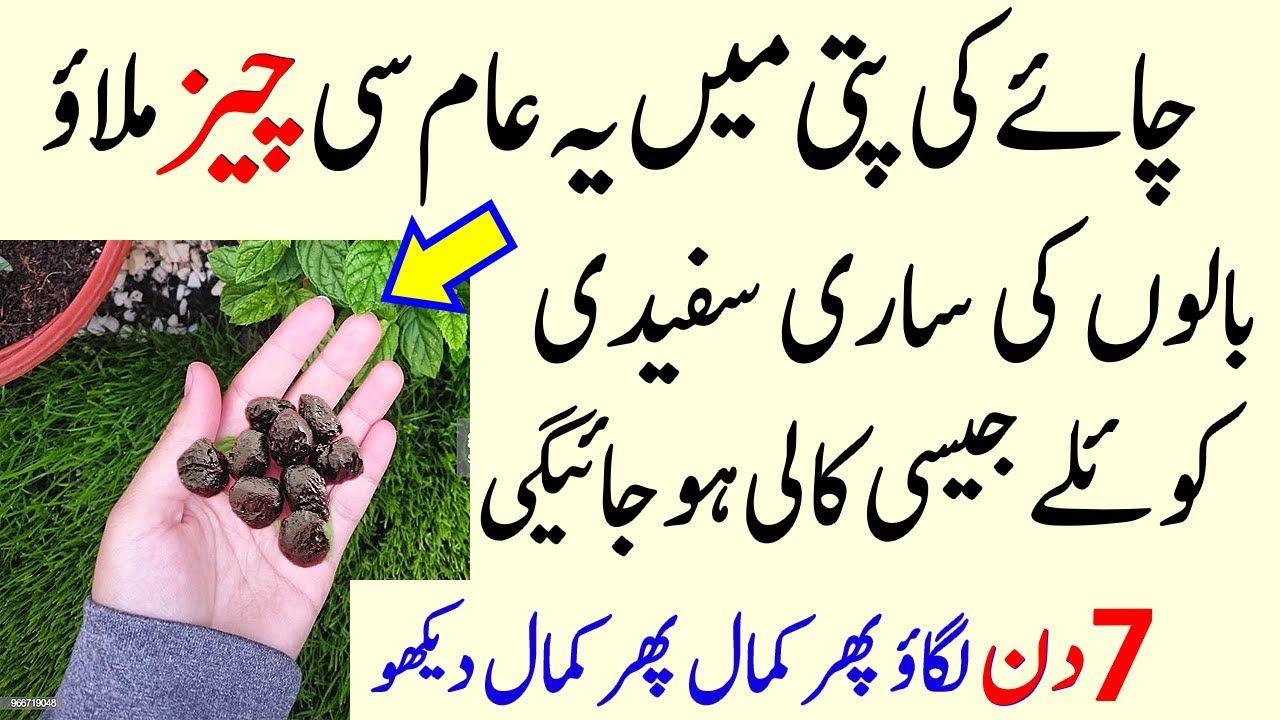 Change White Hair Into Black Permanently Hindi Urdu Premature Grey Hai Premature Grey Hair Premature Black And Grey Hair