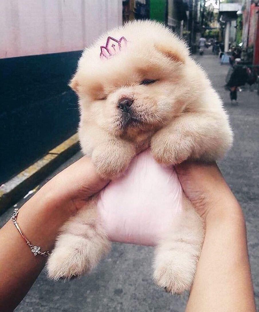 Pin By Hrishita Nath On Cutesy Cute Animals Cute Baby Animals