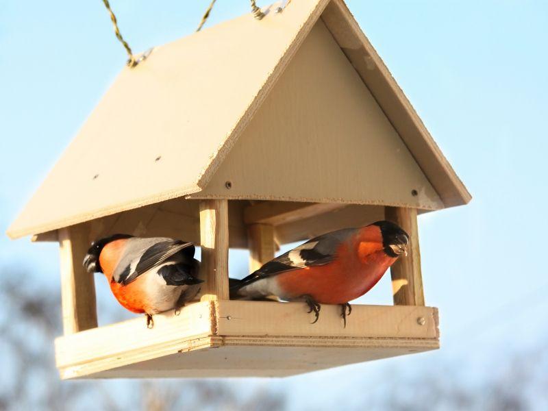 Juist in de donkere wintermaanden fleuren vogels de tuin op, met hun capriolen, gefladder en getjilp, of gewoon met hun mooie, kleurrijke verschijning. Lok ze naar je tuin of balkon met speciaal vogelvoer, ook als het niet vriest, en doe mee aan Het Grote Vogelweekend van Natuurpunt…