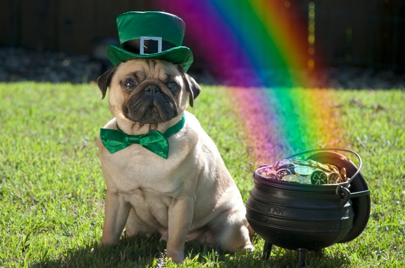 This Is The Leprechaun's Brother,  From Another Mother. Leprepug!