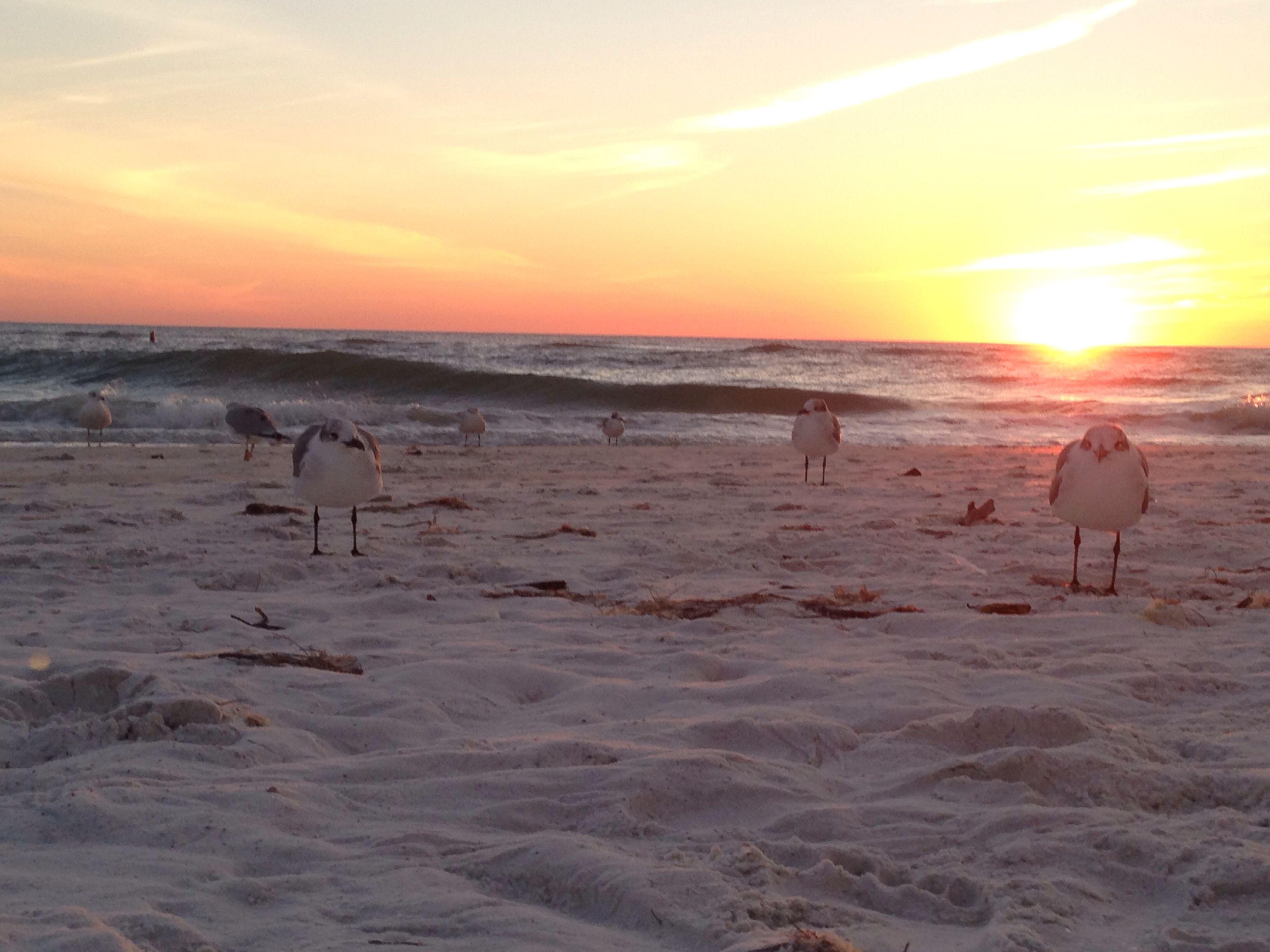 Little friends on North Lido Beach, Sarasota. - intenseone