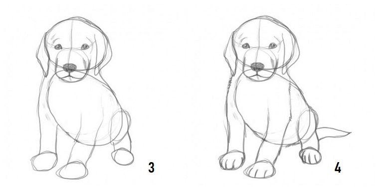 Immagini Da Ricopiare Come Disegnare Un Cane Cane Disegnato A Matita Disegni A Matita Disegni A Matita Facili Disegni