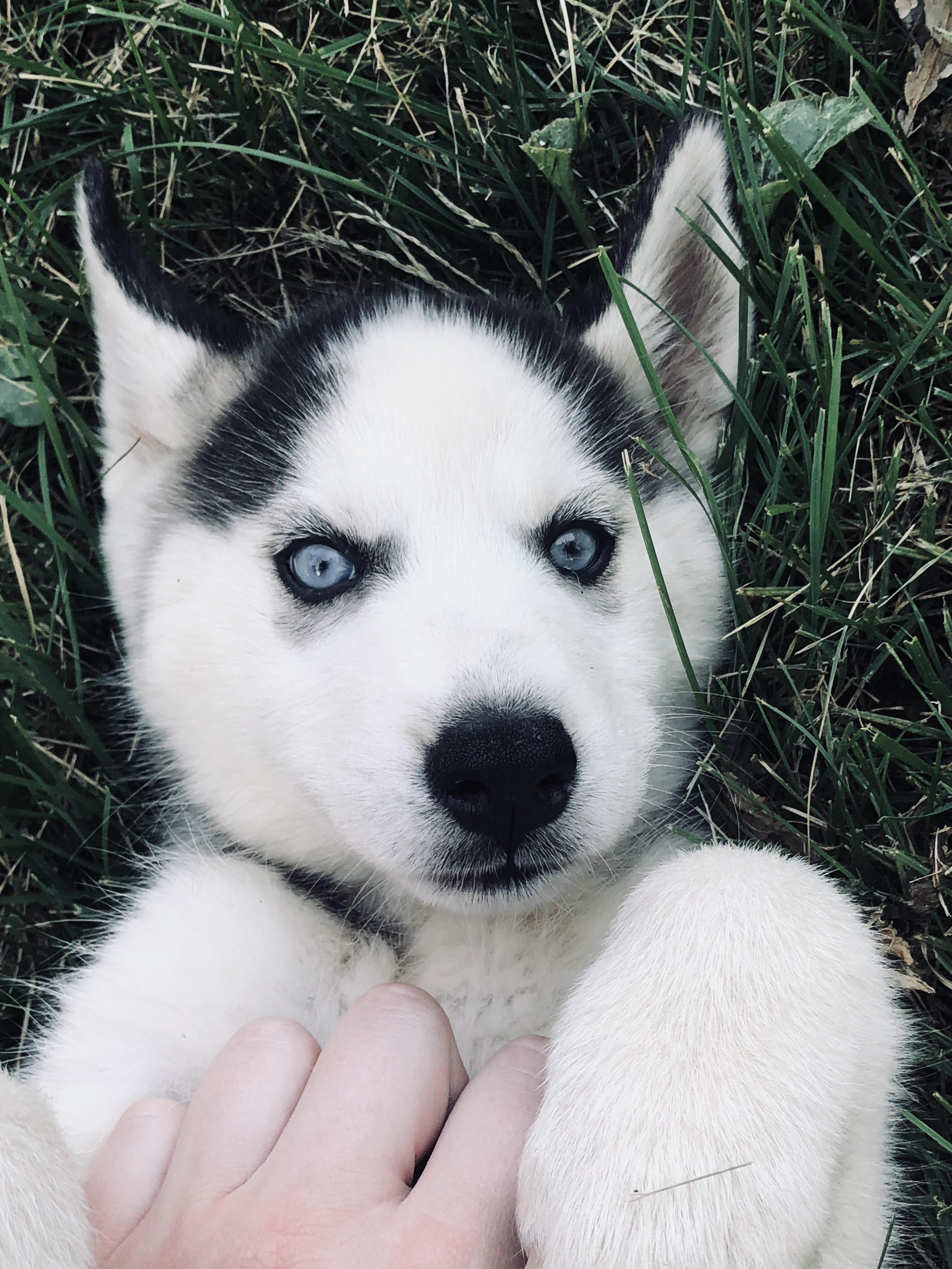 Meet My New Puppy Lunahttps I Redd It Rifj8lv5qij11 Jpg