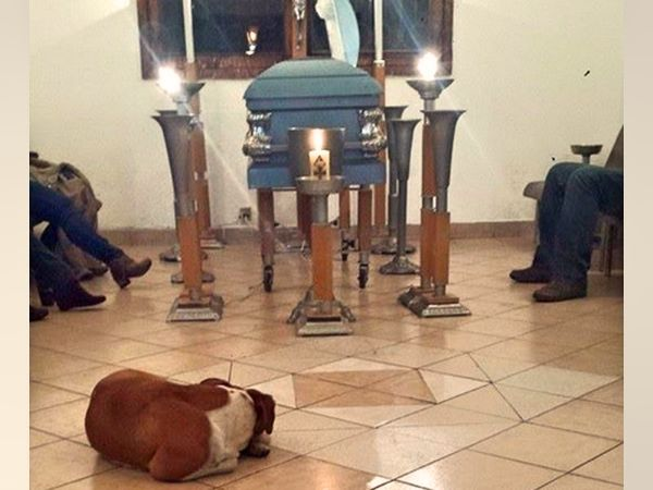 Stray Dogs Show Up To Funeral Of Woman Who Fed And Loved Them Dogs Dog Show Stray Dog
