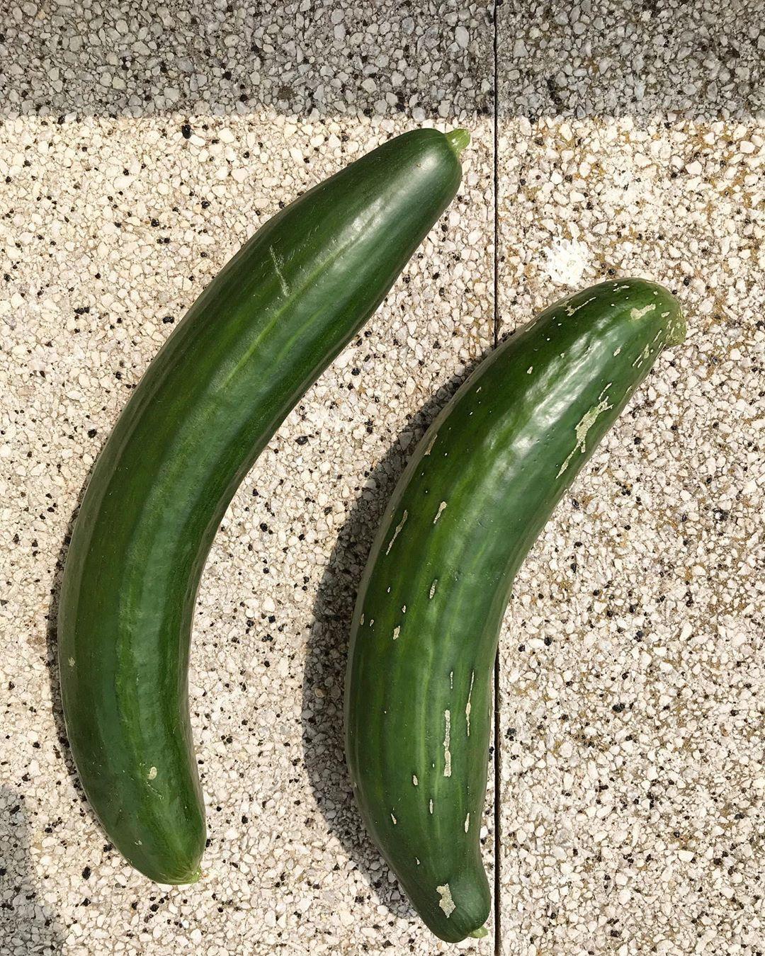 Das Sind Sie Also Die Letzten Beiden Gurken Fur Dieses Jahr Wir Haben Von Einer Pflanze Weit Uber Zehn Gurken Geerntet Und Ich Ka Erntezeit Garten Pflanzen