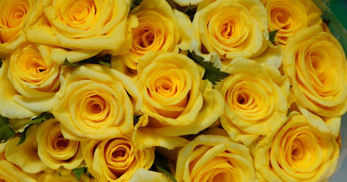 Wallpaper Yellow Roses Background In 2020 Yellow Roses Rose