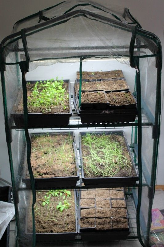 Grow Lights Mini Greenhouses For Seed Starting Family Food