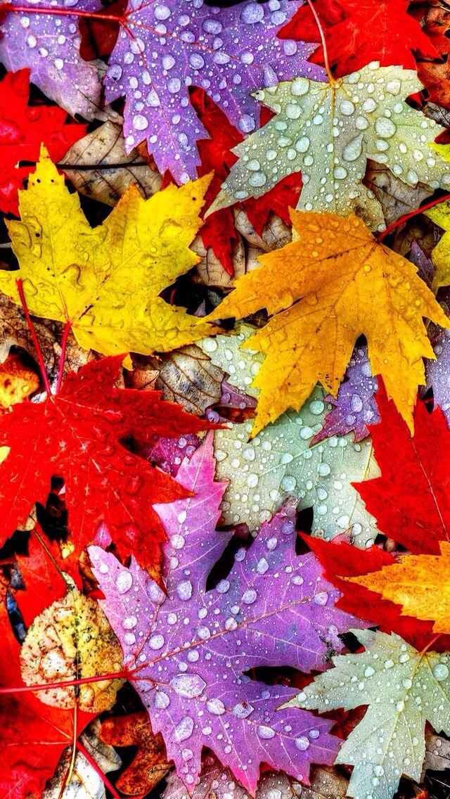 FallLeaves Blätter tapeten, Iphone hintergrundbild
