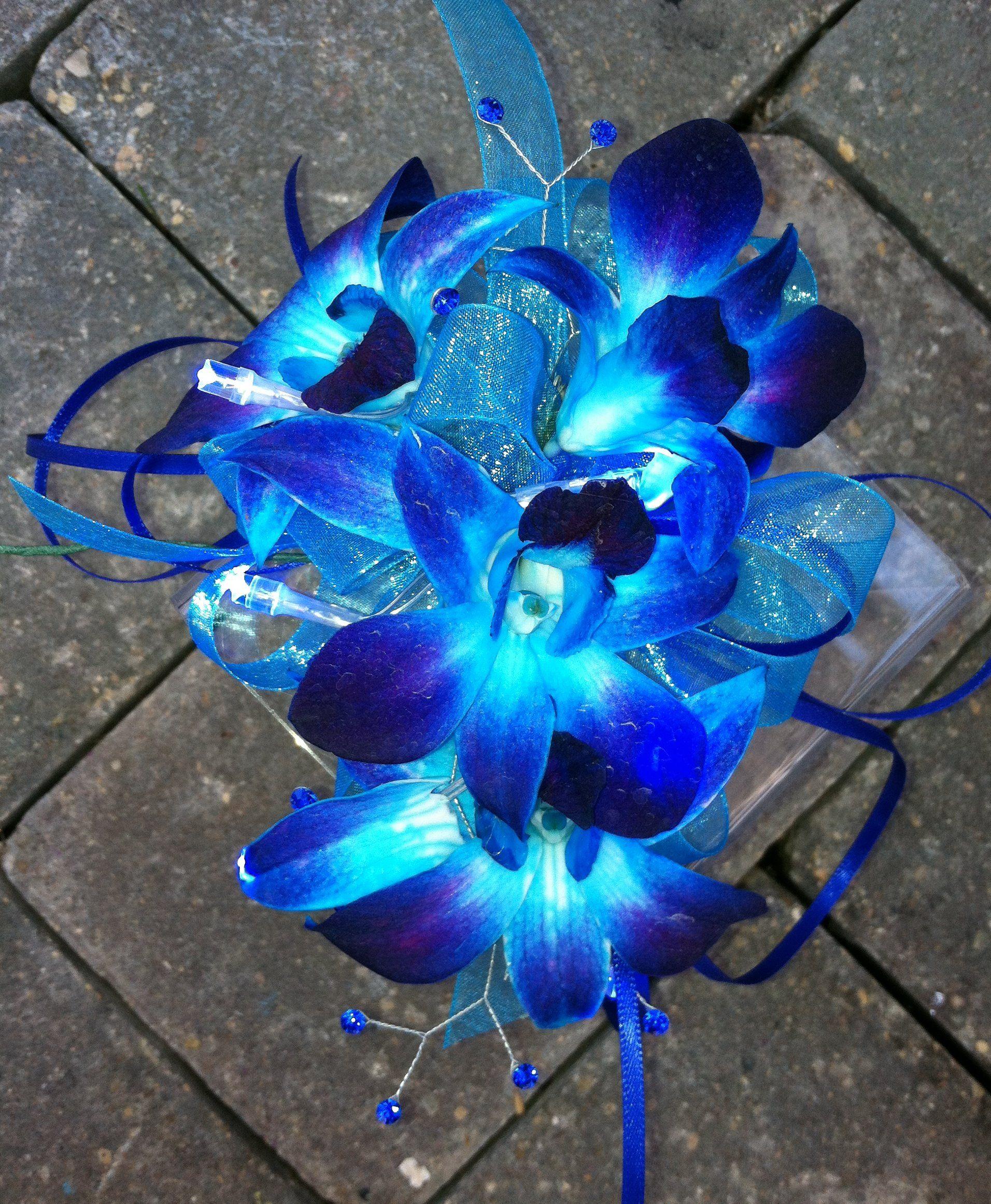 Shocking blue dendrobium orchids prom pinterest shocking