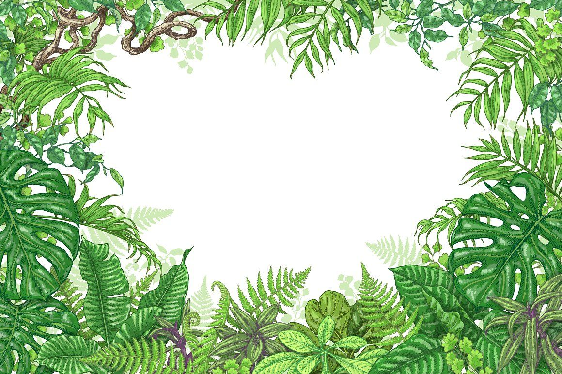 Amazon Rainforest Frame Plant Drawing Plant Art Jungle Drawing
