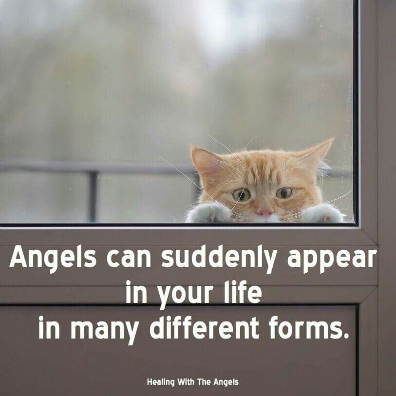Angels can show up in physical form, such as a stray animal who - physical form