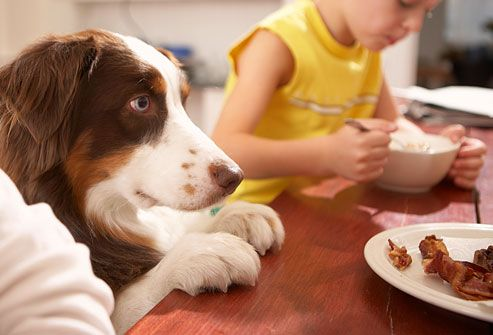 Slideshow Dog Behavioral Problems Barking Chewing And More