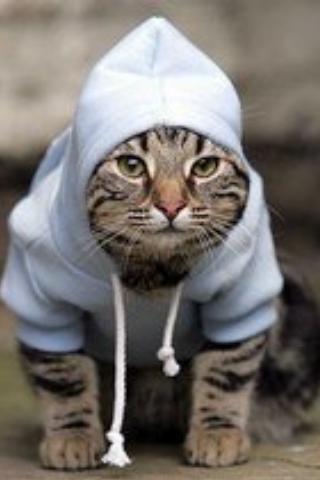 Vai me dizer que nunca ficou inspirado depois de assistir Rocky Balboa? #cat #segunda-feira #batalha