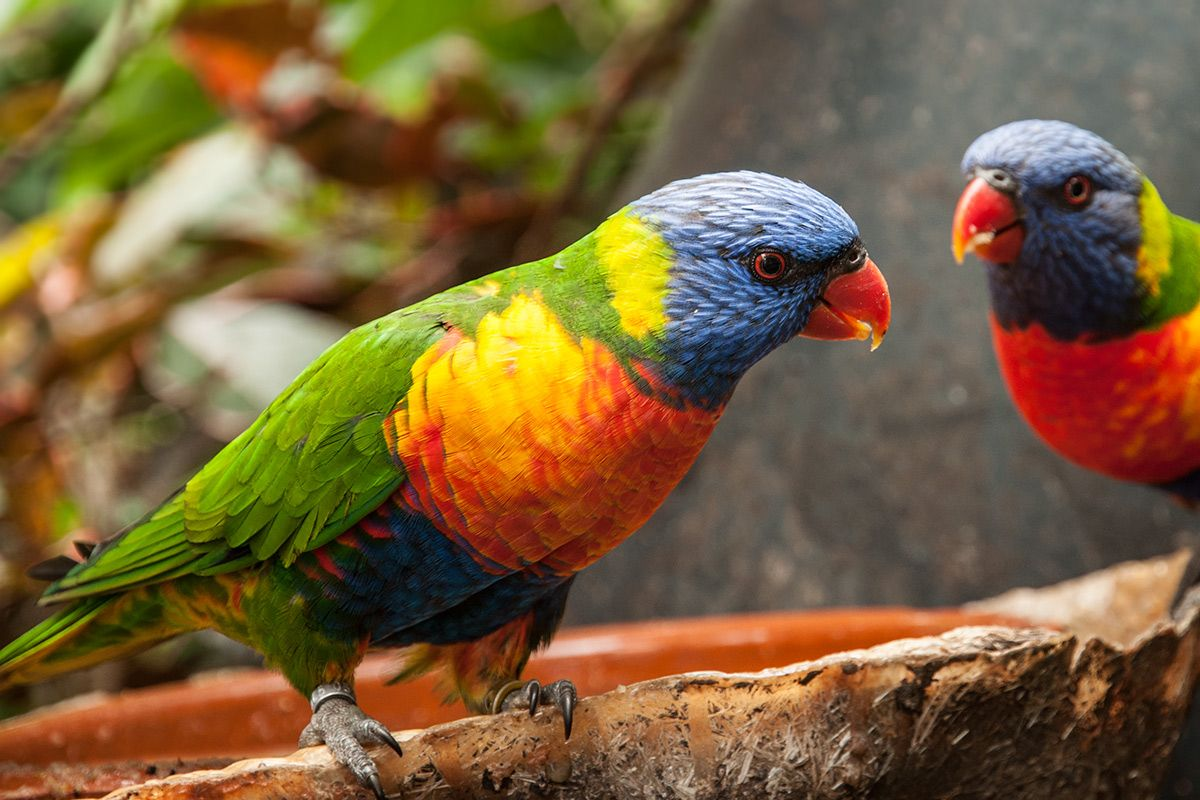 Loro Park Zoo Na Tenerife Ktoru Proste Musite Vidiet Tiere
