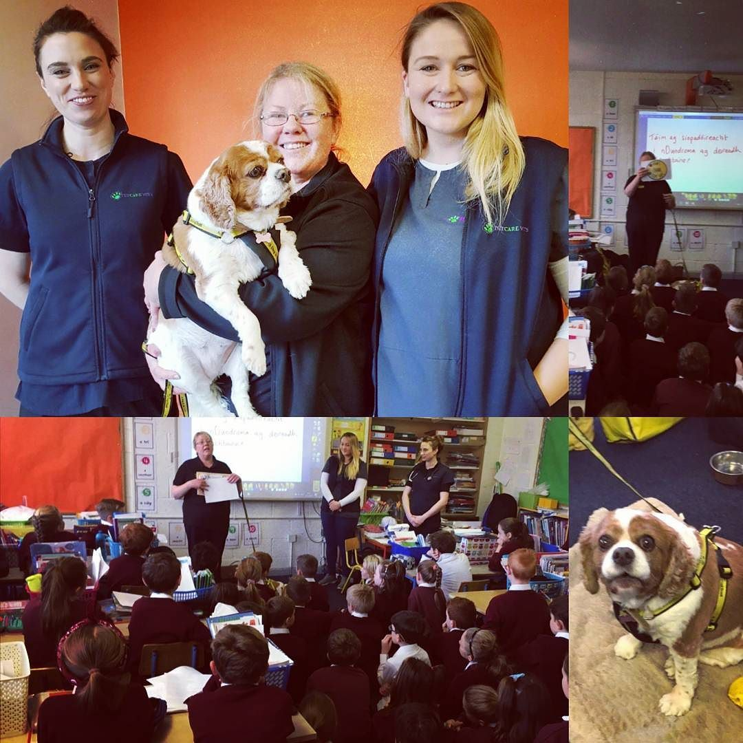 Huge Thank You To Audrey And Lucy From Dogs Trust Ireland Dogs Trust Education Team For Joining Us At St Kevin S National School In Gr Dogs Trust Pet Care Vets