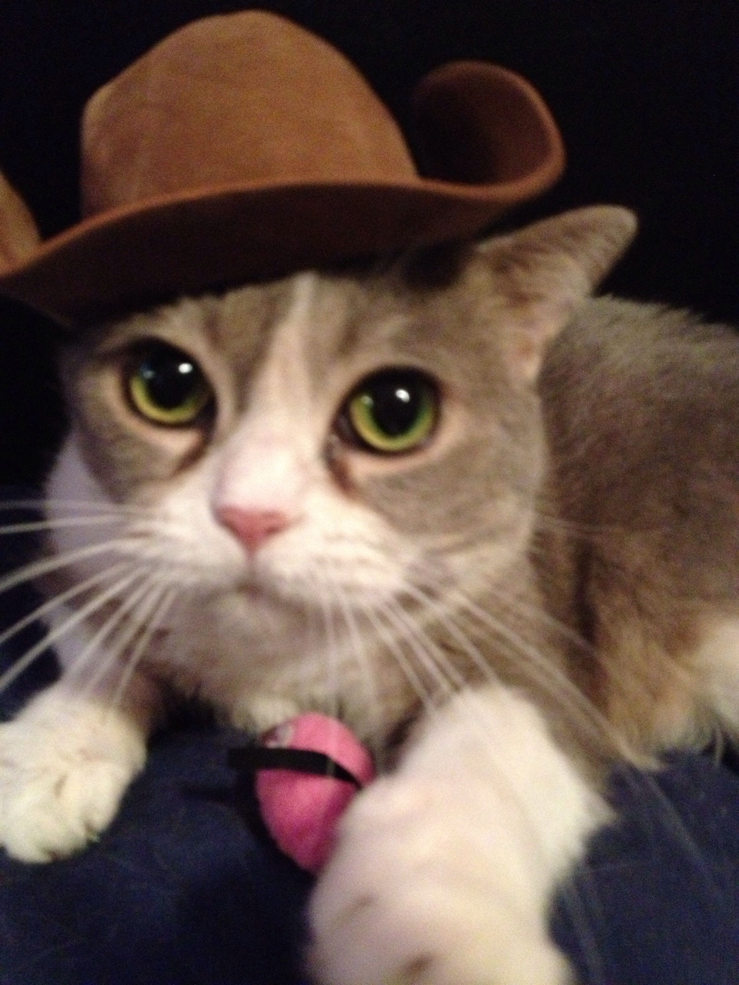 My cowboy cat, Parker Paws Whiskers