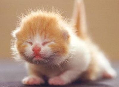 50 Best Cute Kitten Pictures - Cutest Kitten Pics