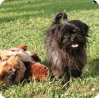 Pin By Jo Wiest On Rescue Dogs Pinterest Dogs Shih Tzu And Pets