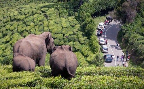 1X - Elefanten